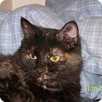 Adopt A Pet :: Mama - Tucson, AZ