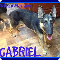 Adopt A Pet :: GABRIEL - New Brunswick, NB