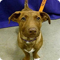 Adopt A Pet :: Kala-Pending! - Detroit, MI