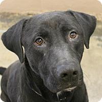 Adopt A Pet :: Gero - Hilton Head, SC