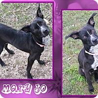 Adopt A Pet :: Mary Jo - Ringwood, NJ