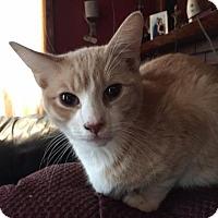 Adopt A Pet :: Russo - Philadelphia, PA