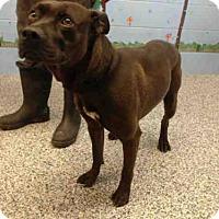 Adopt A Pet :: A500812 - San Bernardino, CA