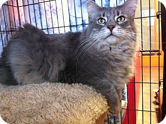 Domestic Longhair Cat for adoption in Topeka, Kansas - Radar