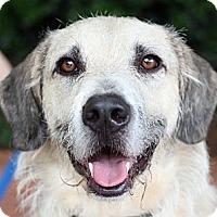 Adopt A Pet :: Comet - Atlanta, GA