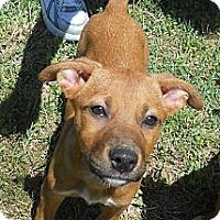 Adopt A Pet :: Stefanie - Austin, AR