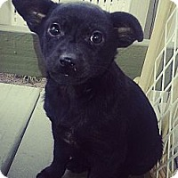 Adopt A Pet :: Jade - Chicago, IL