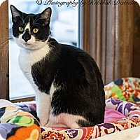 Adopt A Pet :: Rainier - Byron Center, MI