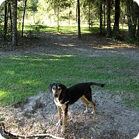 Adopt A Pet :: Azalea - Williston, FL