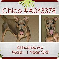 Adopt A Pet :: Chico - Lufkin, TX
