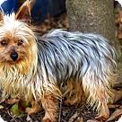 Adopt A Pet :: ATLAS-FOSTER NEEDED