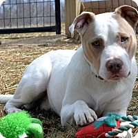 Adopt A Pet :: Harry - Delaplane, VA