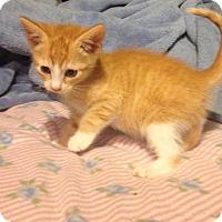 Adopt A Pet :: Cashew - East Brunswick, NJ