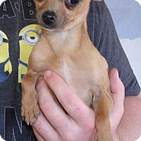 Adopt A Pet :: MINI ME - Corona, CA