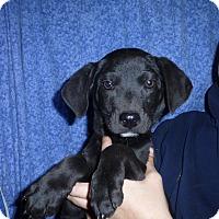 Adopt A Pet :: Reecie - Oviedo, FL
