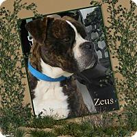 Adopt A Pet :: Zeus - Crowley, LA