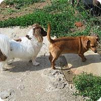 Adopt A Pet :: Oscar with Buster - Rockingham, NH