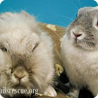 Adopt A Pet :: Princess Bun Bun - Maple Grove, MN