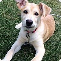 Adopt A Pet :: VANILLA - Winnipeg, MB