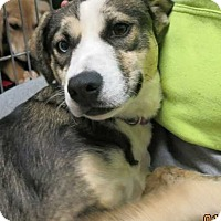 Adopt A Pet :: Lucy - Clear Lake, IA