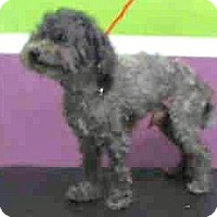 Adopt A Pet :: Smokey-Adoption Pending - Boulder, CO