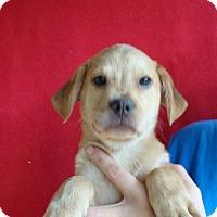 Adopt A Pet :: Raine - Oviedo, FL