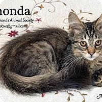 Adopt A Pet :: Rhonda Roo - Ortonville, MI