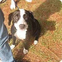 Adopt A Pet :: MEL - Jacksonville, FL
