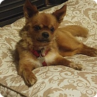 Adopt A Pet :: Boldy - Fallston, MD