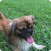 Adopt A Pet :: Pistol Pete - Ocala, FL