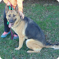 Adopt A Pet :: Zoey (bonded to Zeus) - Greeneville, TN