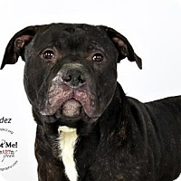 Adopt A Pet :: Valdez - Kansas City, MO