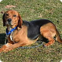 Adopt A Pet :: Manny - Akron, OH