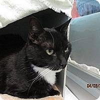 Adopt A Pet :: Moco - Irvine, CA