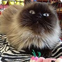 Adopt A Pet :: Bliss - Beverly Hills, CA