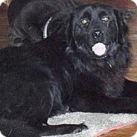 Adopt A Pet :: Liam - Newport, VT