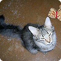Adopt A Pet :: Amora - Scottsdale, AZ