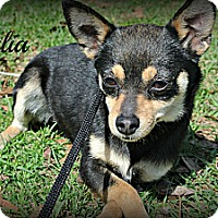 Adopt A Pet :: Talia - Vancleave, MS
