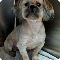 Adopt A Pet :: Charles - Hagerstown, MD