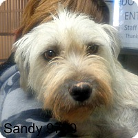 Adopt A Pet :: Sandy - baltimore, MD