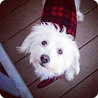 Adopt A Pet :: BENSON - san diego, CA