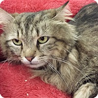Adopt A Pet :: Lucky Cat - Chesapeake, VA