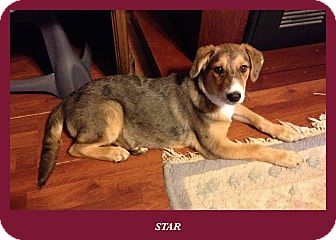 Star | Adopted Dog | C...