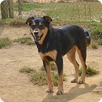 Adopt A Pet :: Matthew - Charlemont, MA