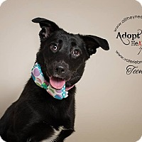 Adopt A Pet :: Teena - Medford, NJ