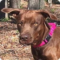 Adopt A Pet :: Joe - Spring Valley, NY