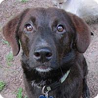 Adopt A Pet :: Bear - Glastonbury, CT