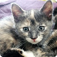 Adopt A Pet :: GreyPebbles - Mississauga, Ontario, ON