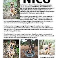 Adopt A Pet :: Nico-Referral - Dripping Springs, TX