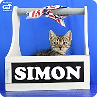 Adopt A Pet :: Simon - Carencro, LA